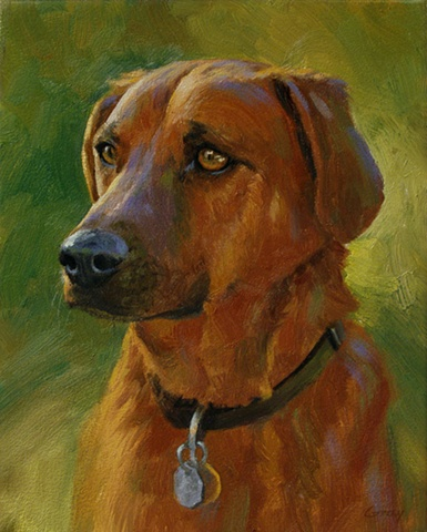Animal portrait, dog, reddish-brown, green, yellow, violet