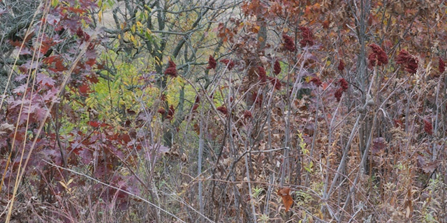 sumac at nippersink creek 3