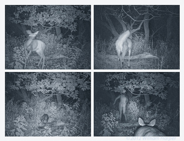following the deer surveillance stills 4