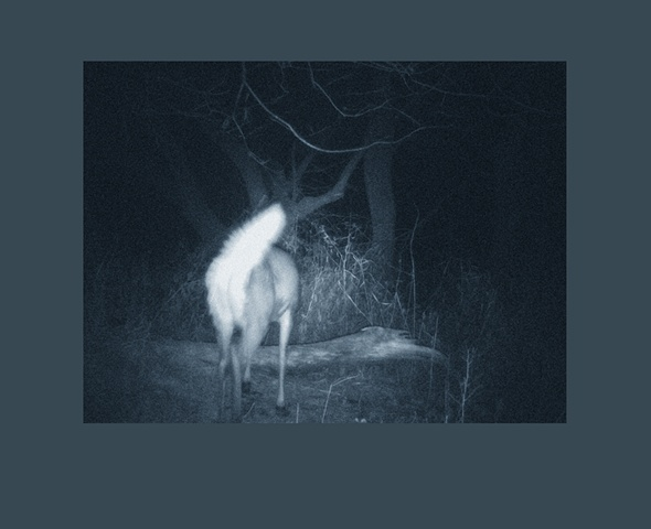 back cover_whitetail