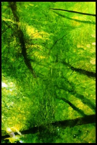 Rainforest, Green Stream