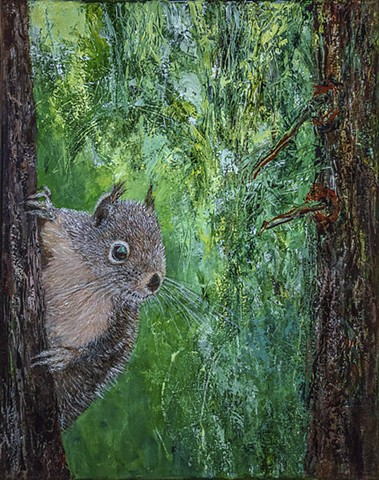 Douglas squirrels are a species of red squirrel that live in redwood forests