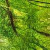 Rainforest_Green Stream