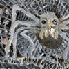 Arachne's Larder 03