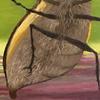 Inordinate Love_bug detail