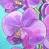 Violet Soliloquy Of Phalaenopsis Amabilis