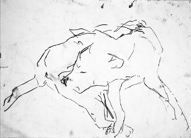 dog (turps)