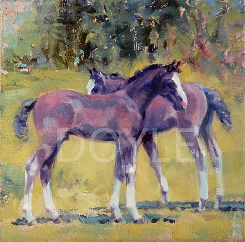 Two foals in Monterrey Virginia