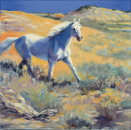 White horse running on the open range of Colorado.