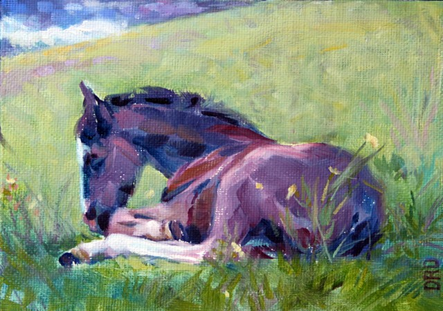 A foal napping in a Spring pasture in Virginia