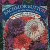12 Bachelor Button