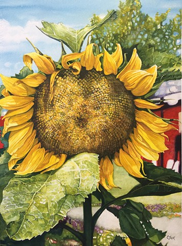 Sunflower Watercolour painting by Conny JAGER