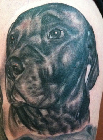 black and grey dog portrait tattoo