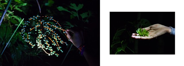 Night Walk, Palm Fruits & Fallen Orchid, Research Station, Monteverde