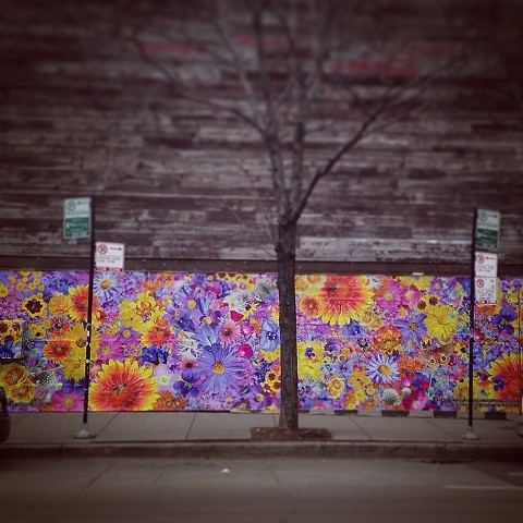 Public Art Project : For Lost Prairies : Violet Hour : Chicago : Nov-Dec 2014