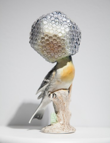 Camouflage XVIII (Hurricane Helmet for Endangered Monserrat Oriole)