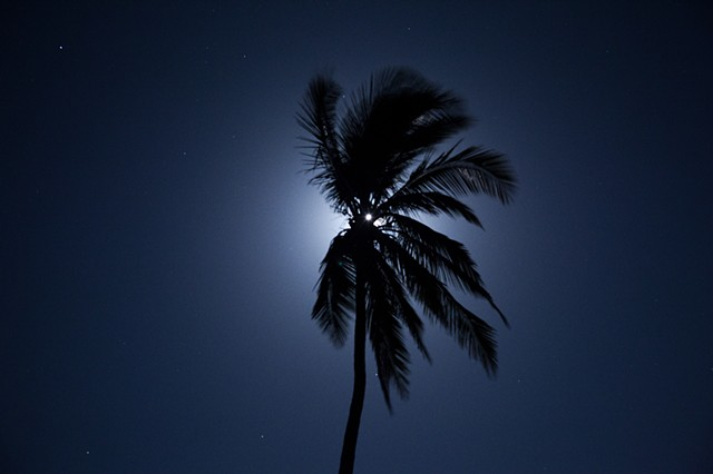 Moon Hides Behind a Palm, Costa Rica