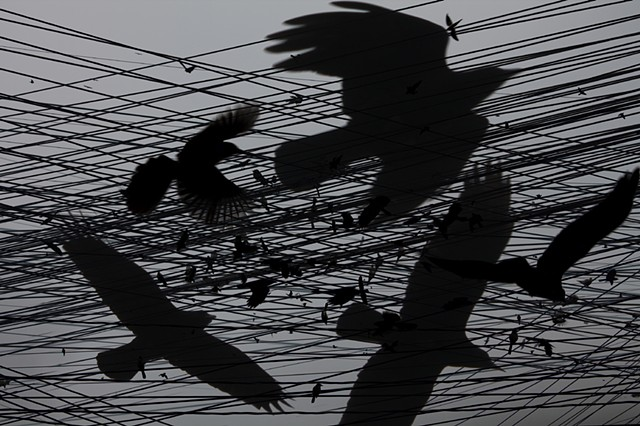 One Hour of Birds (Maya Land – Crows, and others, on the wires)