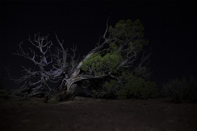 Ancient Juniper at Midnight, Backpacking in Canyonlands