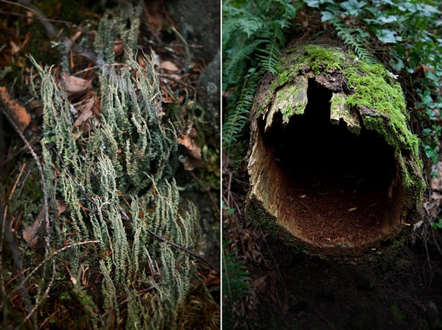 Lichen, Norway & Hollow Log, Oregon