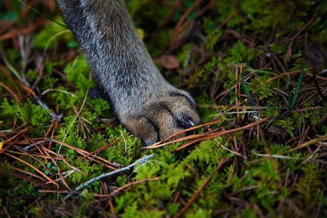 His Paw, Western Virginia Mountains