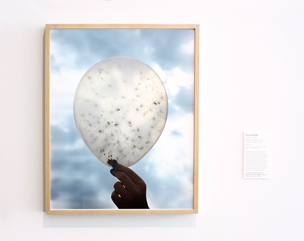 Documentation from 'Milkweed Dispersal Balloons' shown at the DePaul Art Museum