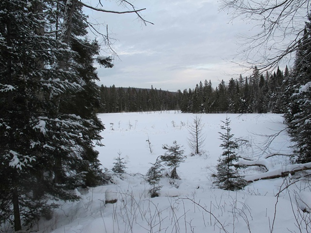 Frozen Lac Jeannie