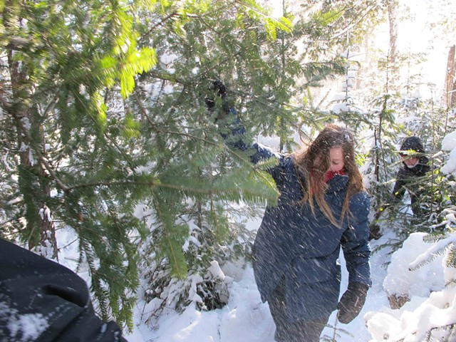 Finding the perfect Christmas tree in the forest