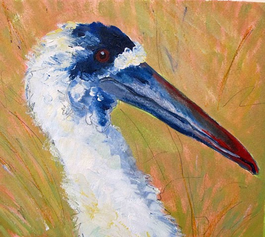 Wooly Necked Stork: Detail from Wading Birds of Uganda
