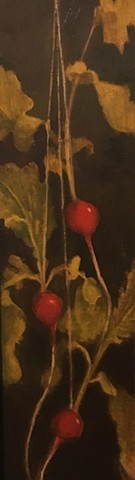 Radishes Suspended