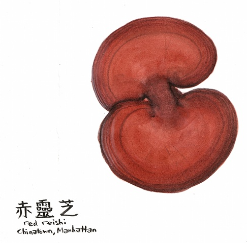 Red Reishi in Chinatown