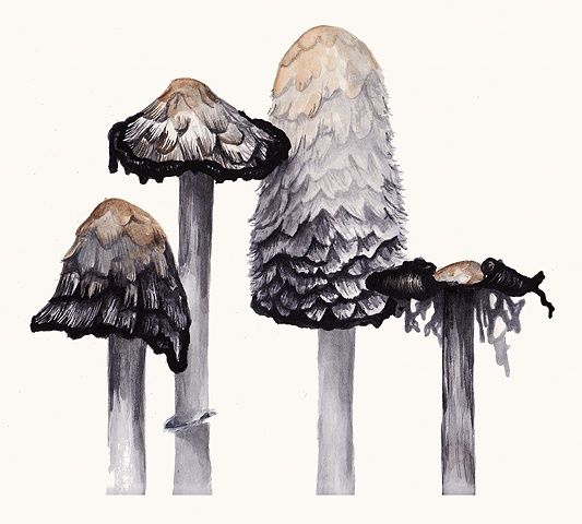 Shaggy Mane Family