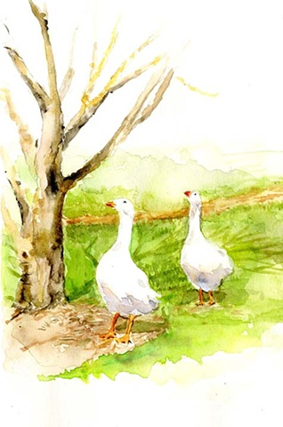geese, watercolour, vintage, illustration
