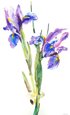 Watercolor Painting by Qing Song, Iris