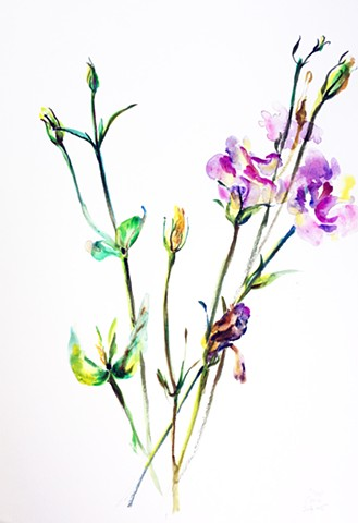 Watercolor Painting by Qing Song, Flower