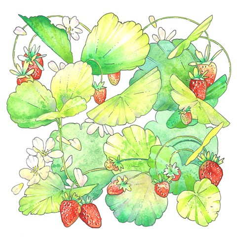 Garden Strawberry, frangaria X ananassa