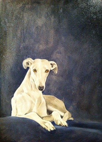 white Greyhound in blue gray tones