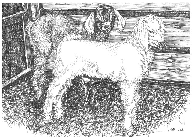 A pen and ink drawing of two baby goats or kids by Leslie Moore of PenPets.
