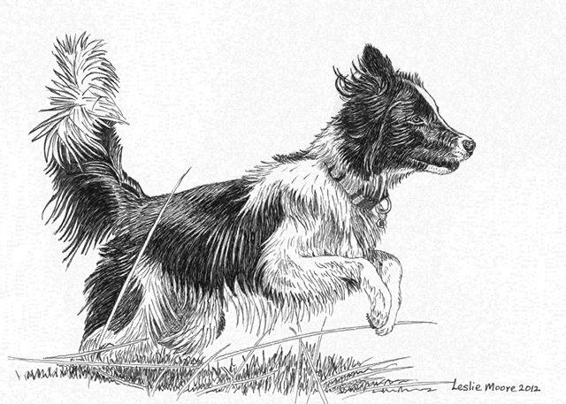 A pen-and-ink drawing of a Border collie/Australian blue heeler mix by Leslie Moore of PenPets.