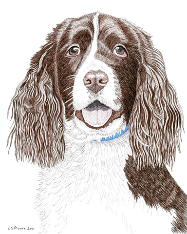 A colored pen and ink drawing of a Springer Spaniel by Leslie Moore