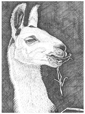 A pen and ink drawing of a llama chewing hay by Leslie Moore of PenPets.