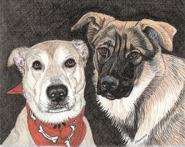 a colored pen and ink & colored pencil drawing of a yellow Labrador retriever mix and an elkhound/German shepherd mix by Leslie Moore of PenPets