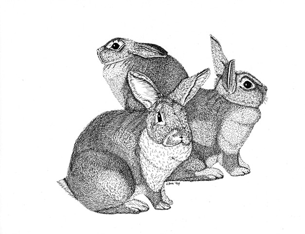 A pen and ink drawing of three rex rabbits by Leslie Moore of PenPets.