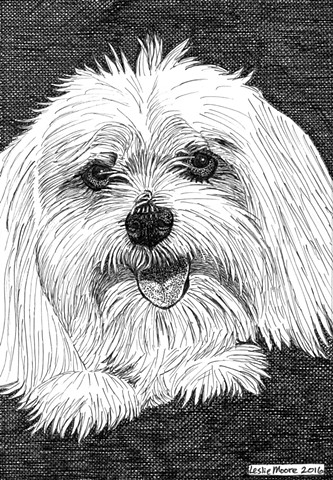 a pen-and-ink drawing of a Maltese dog by Leslie Moore of PenPets