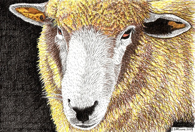 a colored pen and ink drawing of a sheep's head by Leslie Moore of PenPets