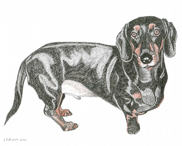A colored pen and ink drawing of a black and tan, short-haired Dachshund by Leslie Moore