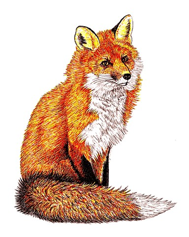 a colored pen and ink drawing of a red fox by Leslie Moore of PenPets
