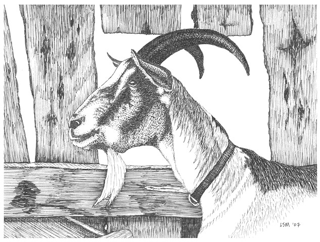 A pen and ink drawing of a billy goat by Leslie Moore of PenPets.