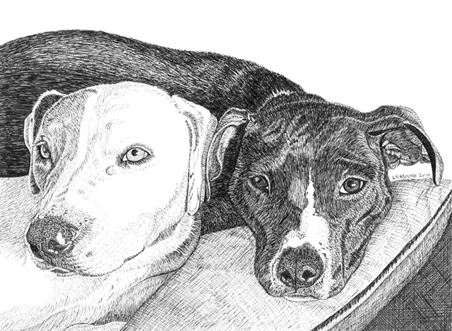 A pen and ink drawing of two pit bull dogs by Leslie Moore