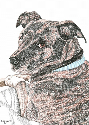 A colored pen and ink drawing of a brindled pit bull by Leslie Moore.